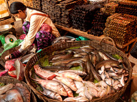 Woman with Basket of Fish (Cambodia)