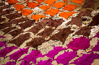 Dyed Hides Drying (Morocco)